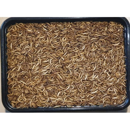Buffalowormen diepvries